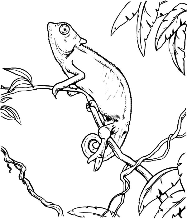 Pin Camaleon-colouring-pages on Pinterest