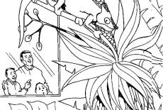 How To Draw Chameleon Coloring Pages : Best Place to Color