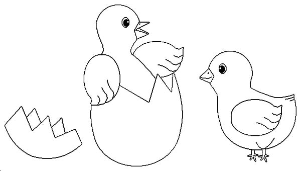 Chick Hatching Stretch Her Foot Coloring Pages Best