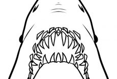 Great White Shark Jaws Coloring Pages : Best Place to Color