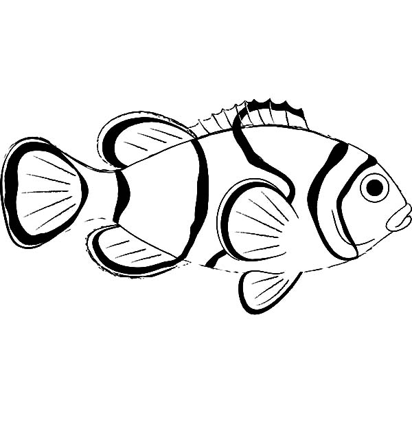 Clown Fish Outlines