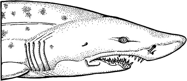Shark Jaws Coloring Pages For Kids : Best Place to Color