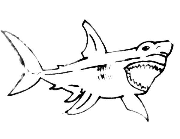 Sketch Of Jaws Coloring Pages : Best Place to Color