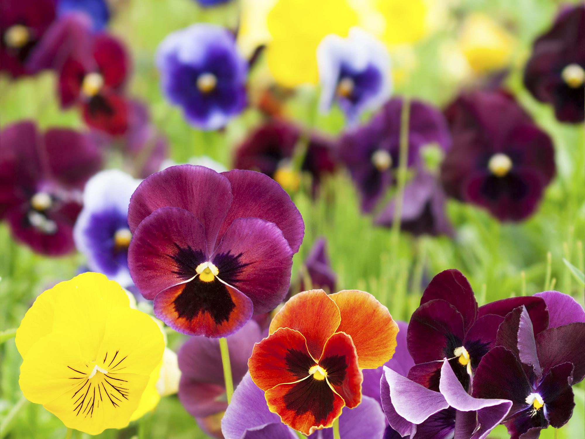 Flores Mais Lindas e Raras do Mundo  Fotos  Toda Atual
