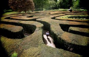 The Hampton Court maze in England planted between 1689 and 1695 by George London and Henry Wise. (Dan Kitwood/Getty Images)