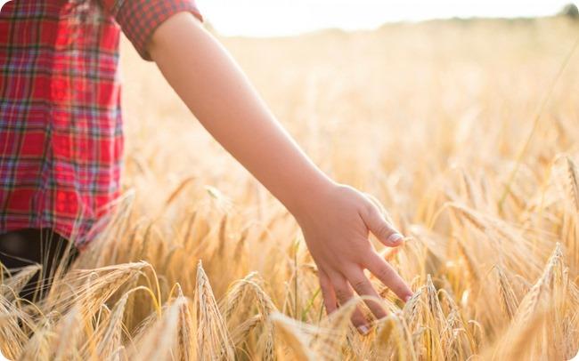 mood-boy-hand-field-wheat-background-1680x1050
