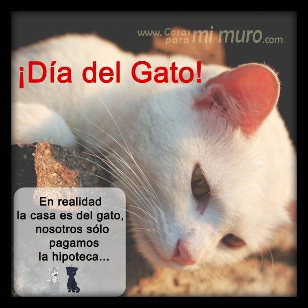 ¡Día del Gato!