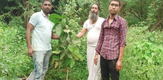 People, large plants planted in the Aravalli mountain range by the Sanse campaign