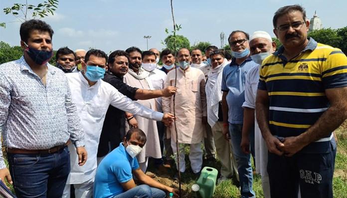 Rotary club Aastha to plant 2 thousand saplings to make sector 11E block park a faith forest