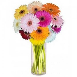15 Mix Color Gerberas In Vase