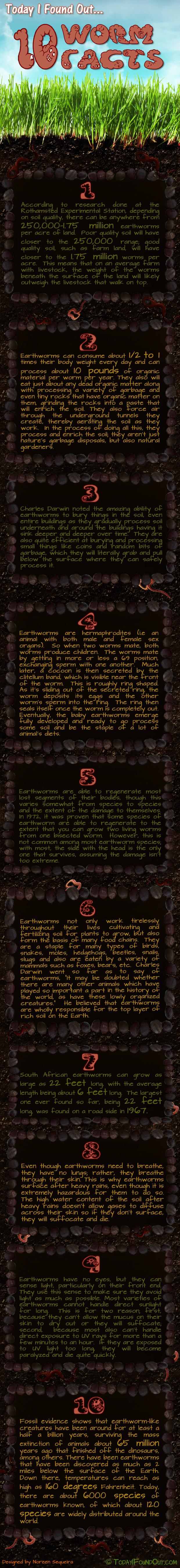 Worm Infographic