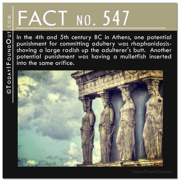 TIFO Quick Fact 547