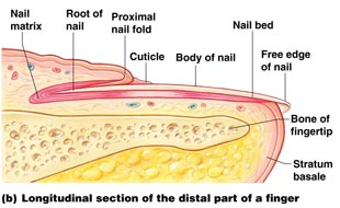 why toenails turn yellow