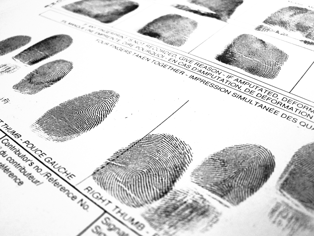 How Do Fingerprints Form and Can They Regenerate?