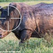 Technology takes on Africa's poaching crisis
