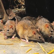 Lassa Fever kills four in Gombe State