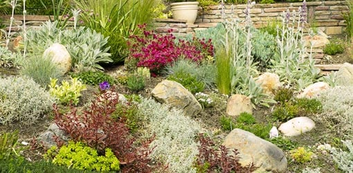 landscaping with drought-tolerant