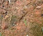 Clay soil.