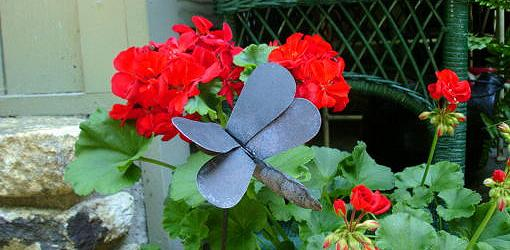 How to Grow Geraniums Over the Winter  Todays Homeowner