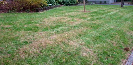 Help for Fertilizer Burn in Lawn Grass  Todays Homeowner
