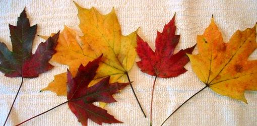 How to Preserve Fall Leaves and Branches with Glycerin  Todays Homeowner