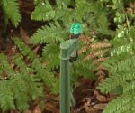 Watering plants using drip irrigation.