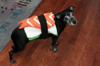17 adorable DIY pet costumes for Halloween