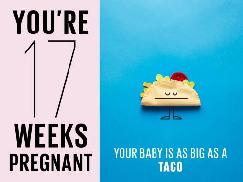 small resolution of felt taco used to show how big baby is at 17 weeks