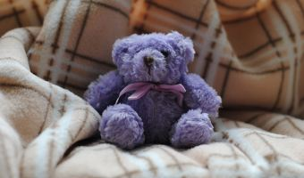 Need care: purple teddy bear on comfy blanket