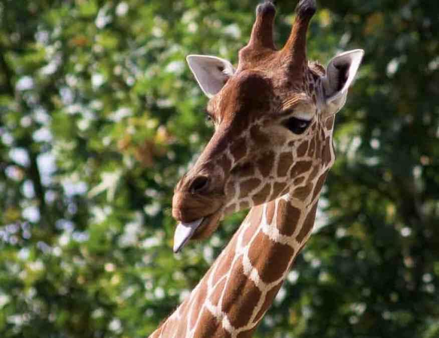 Louisville Zoo Giveaway