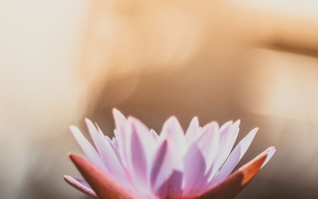 Win a Rejuvenating Giveaway from Lotus Counseling and Wellness