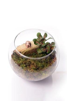 DIY: Terrarium