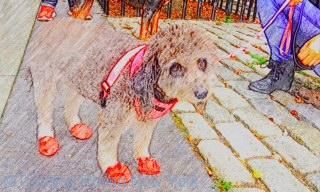 Spotted – dainty red shoes for the dog