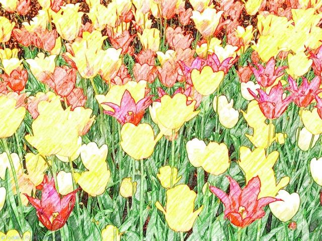 Tulips blooming all over Manhattan