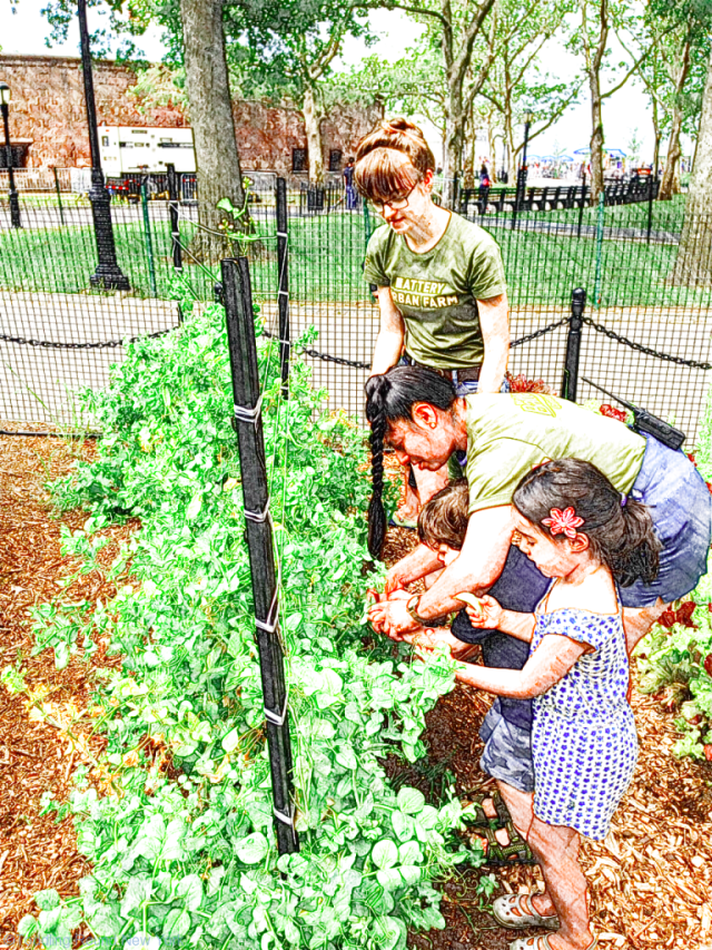 T learning to pick fresh beans at Battery Urban Farm's free kids' activity during the Summer