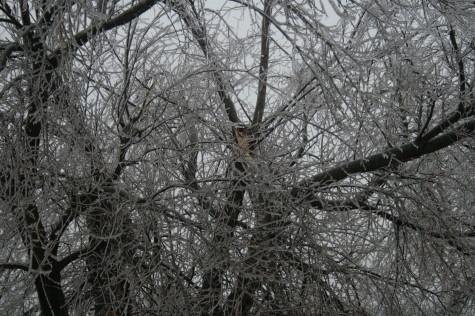 ice-storm-2007_004.JPG