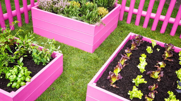 Backyard garden with raised boxes growing vegetables