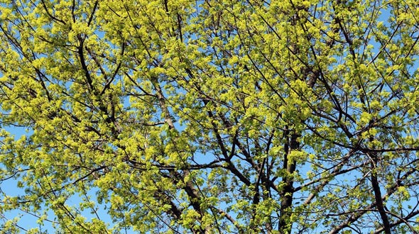 Spring tree growth in Marietta Ga