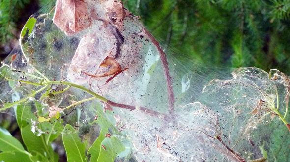 Insect infestation tree emergency Marietta Ga
