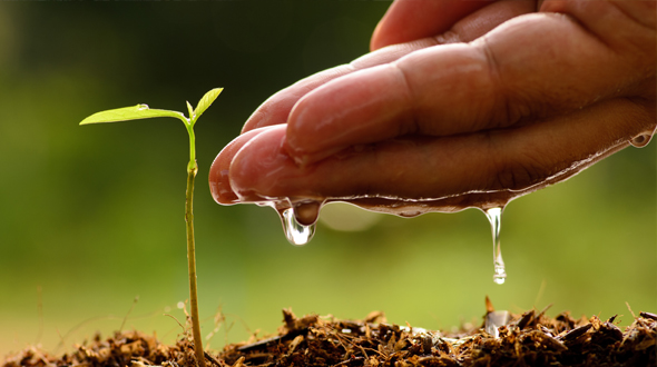 Keeping trees healthy through proper watering and nutrient rich soil