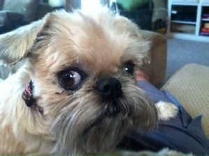 Keeper Loved Greatly, Missed Mightly Dec 19, 2005 - May 17, 2016