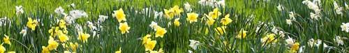 Hierbas y flores en primavera