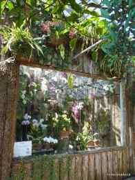 Tropical Landscape House, Allan Gardens Conservatory