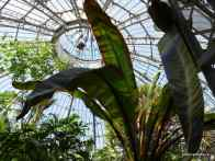 Main Palm House, Allan Gardens Conservatory