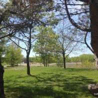 View of Woodbine Beach Park from Ashbridges Bay Park
