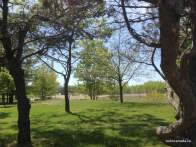 View of Woodbine Beach Park from Ashbridges Bay Park