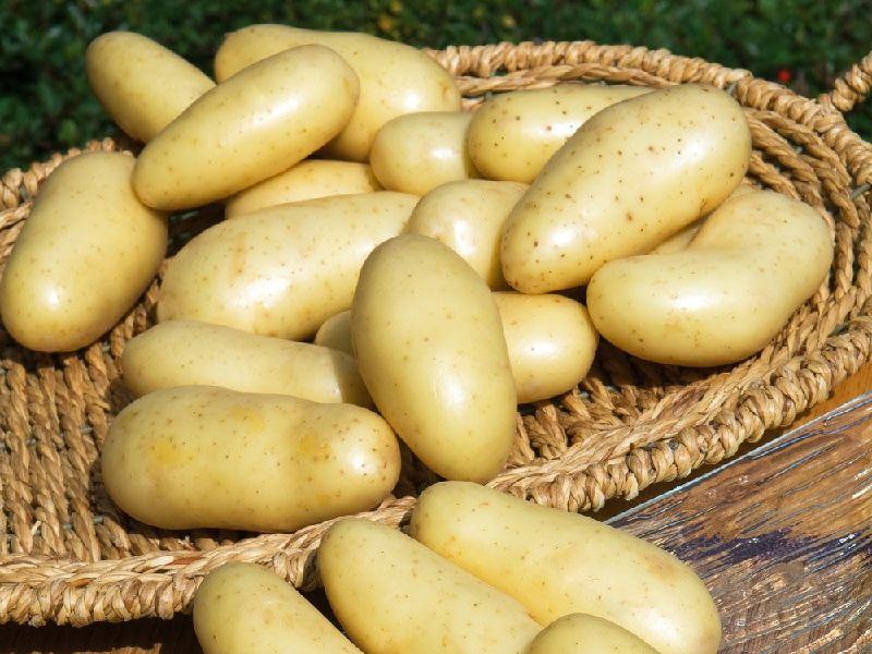 Bondades de la patata 03