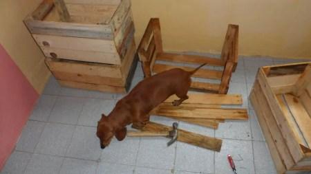 hacer cajones de madera Como Hacer Una Cucha Para Perros Con Cajones De Frutas