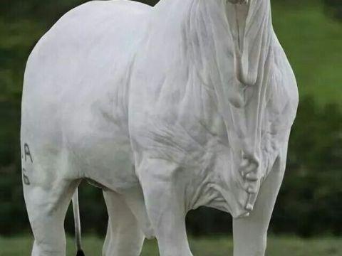 toro raza cebu
