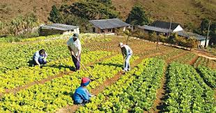 datos curiosos sobre la agricultura